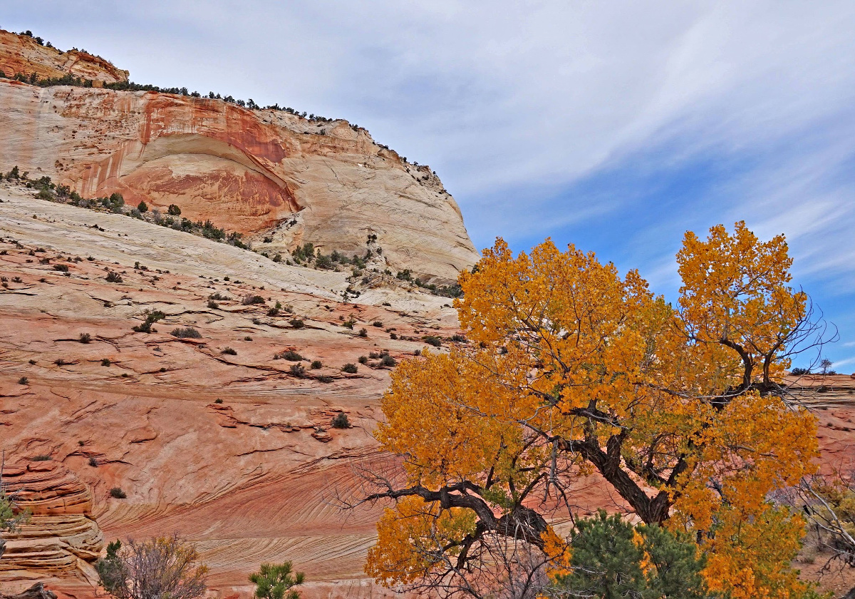 Zion National Park delivers endless photo opportunities especially during the fall.