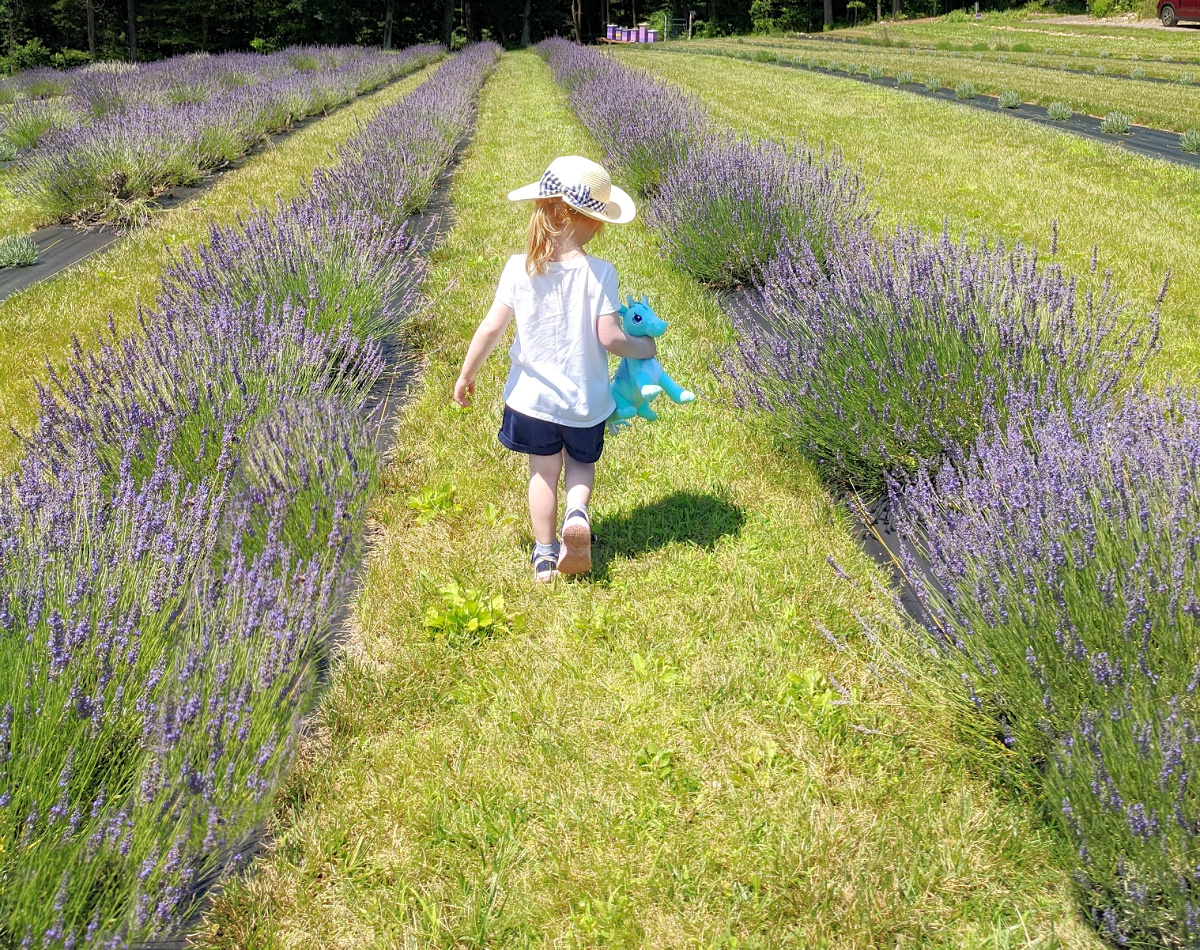 Kids like the freedom of walking around on their own at Hope Hill Lavender Farm.