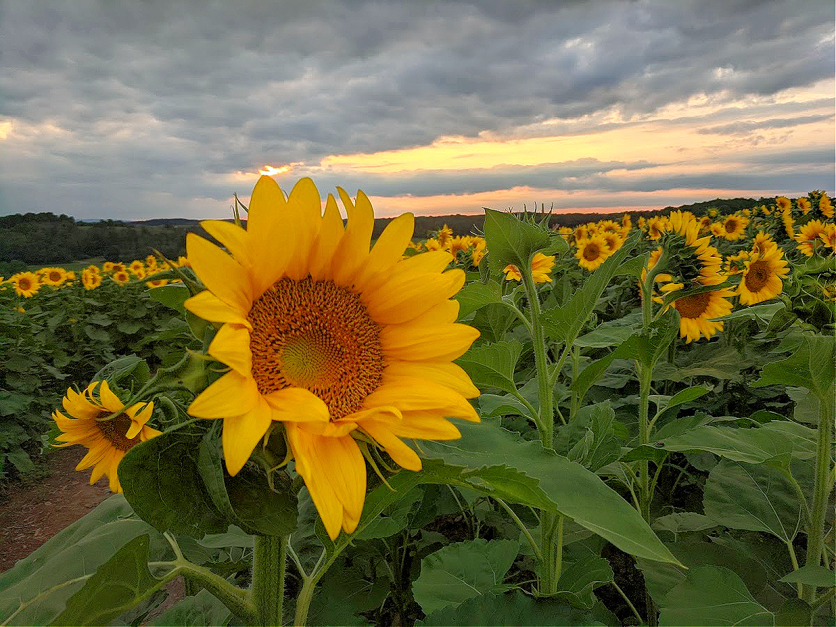 Visit Brown Hill Farms later in a day to catch the sunset.