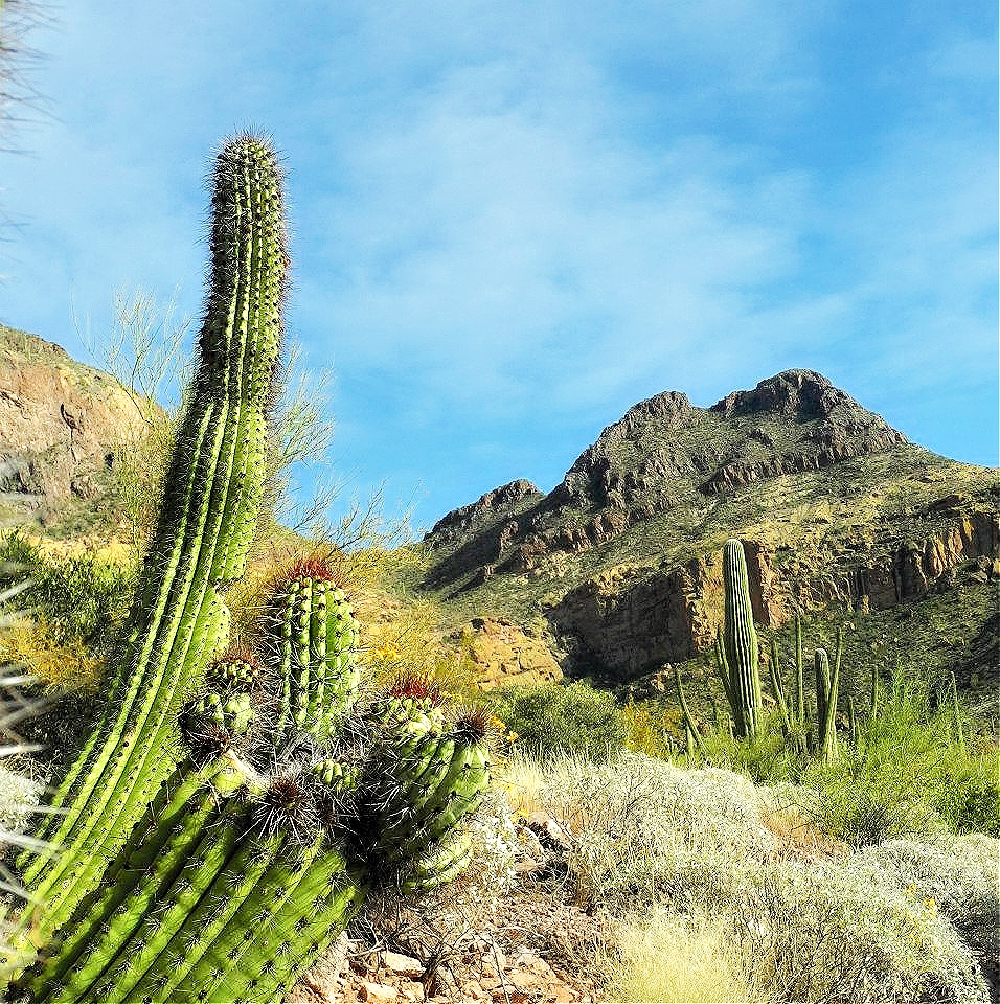 Best national parks to visit in winter. Saguaro National Park.