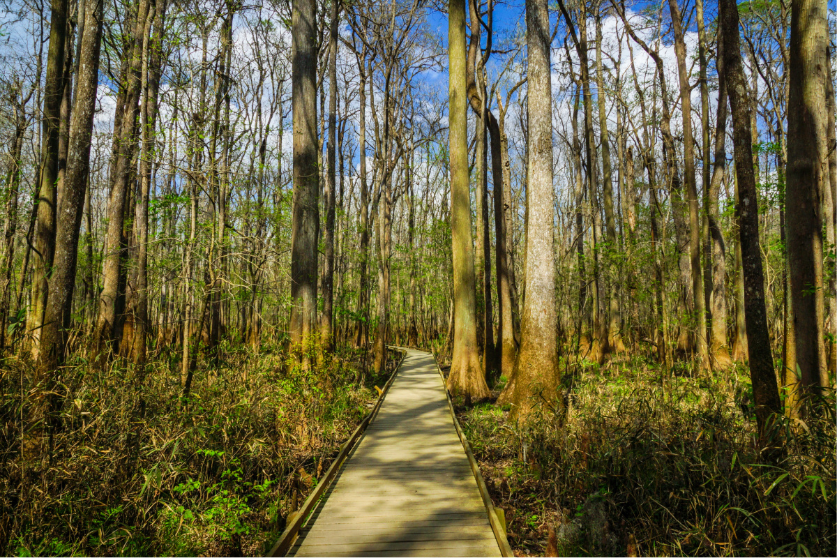 The best national parks to visit in winter. Congaree National Park, South Carolina.