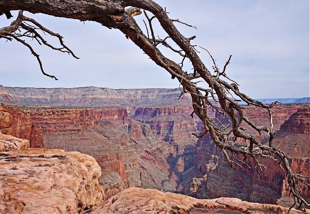 The Grand Canyon framed with tree.