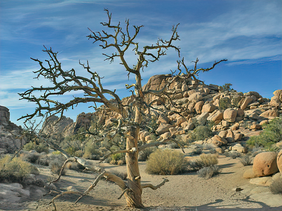 A naked tree and boulders in Joshua Tree National Park.