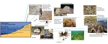 analysis-rocky-shoreline-horizontal-compr