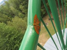 Zábradlí s motýlem