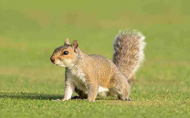 Z Niche Blog Nuisance squirrel 102919
