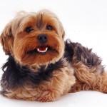 Модельная стрижка собак