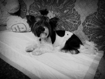 Стрижка собак Александра