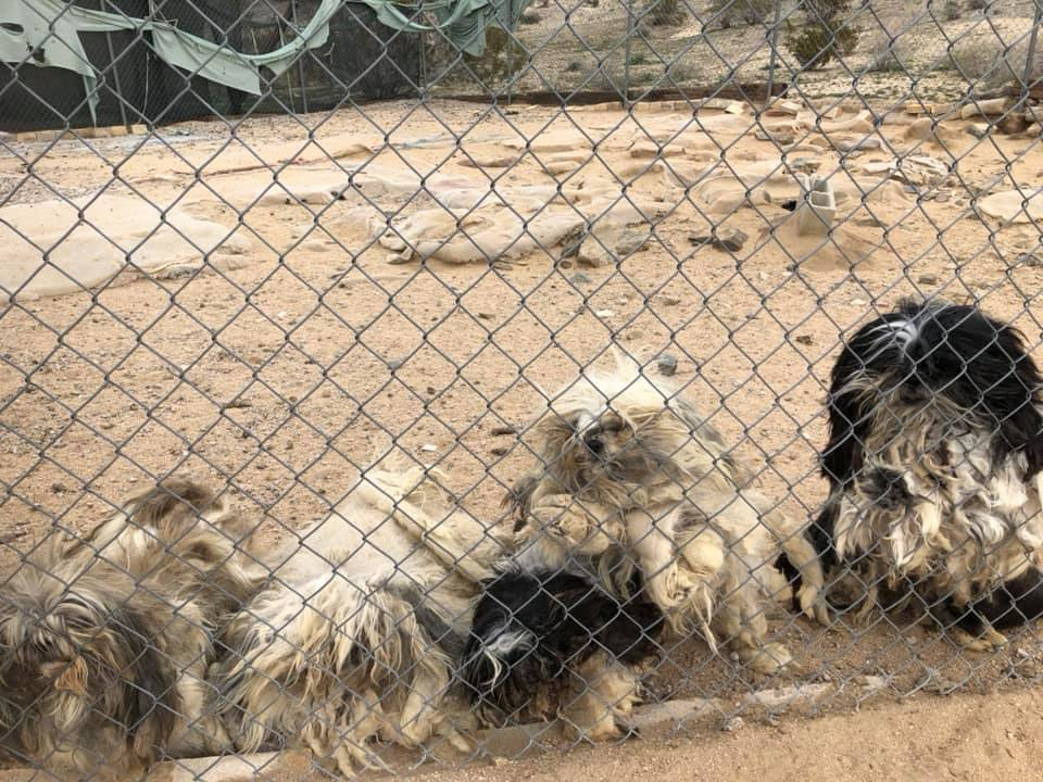 OVER 100 DOGS REMOVED FROM A HOME IN YUCCA VALLEY | Z107 7 FM