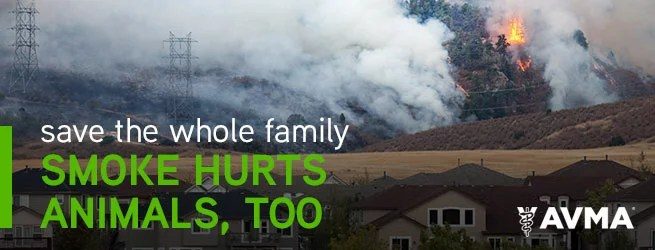 PROTECT YOURSELF AND PETS FROM ASH AND SMOKE