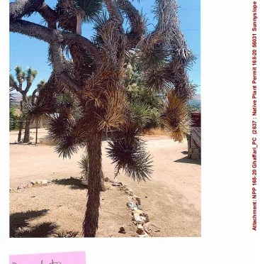 YUCCA VALLEY PLANNING COMMISSION TAKES UP 4 NATIVE PLANT PERMITS