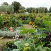 De eetbare tuin - de moes/sier tuin.