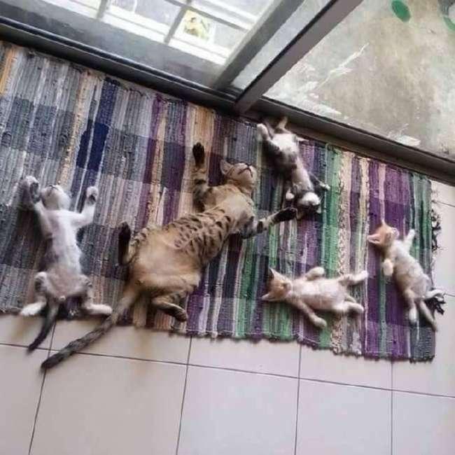 22 кота с сокрушительной харизмой, сопротивляться которой бесполезно
