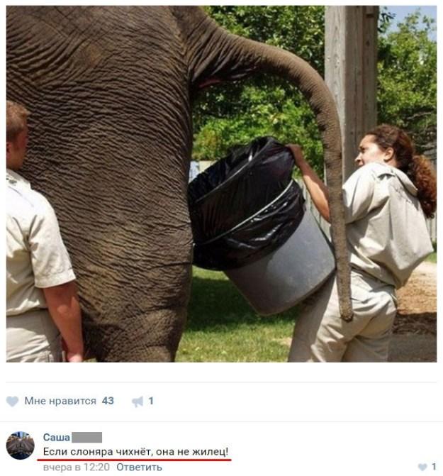 Смешные комментарии из социальных сетей ❘29 фото