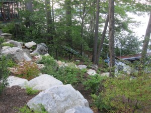 naturalistic landscape