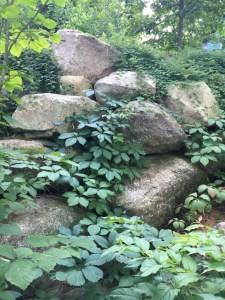 Environmental observations driving landscape design