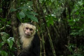 Capuchin Monkeys Everywhere!