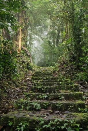 Jungle Pathways That Make You Feel Like Indiana Jones