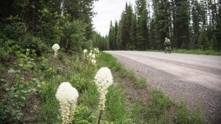 Bear Grass-Lined Roads