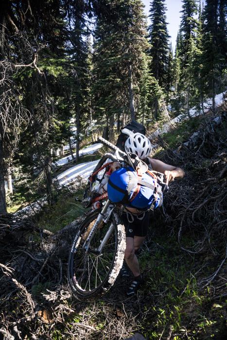 Downed Tree #50ish Being Crossed