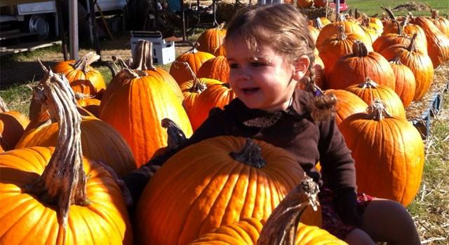 Pumpkin Picking 2011