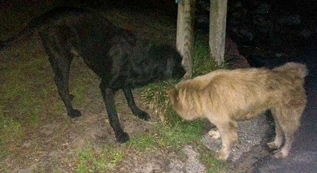 Two Lost Dogs