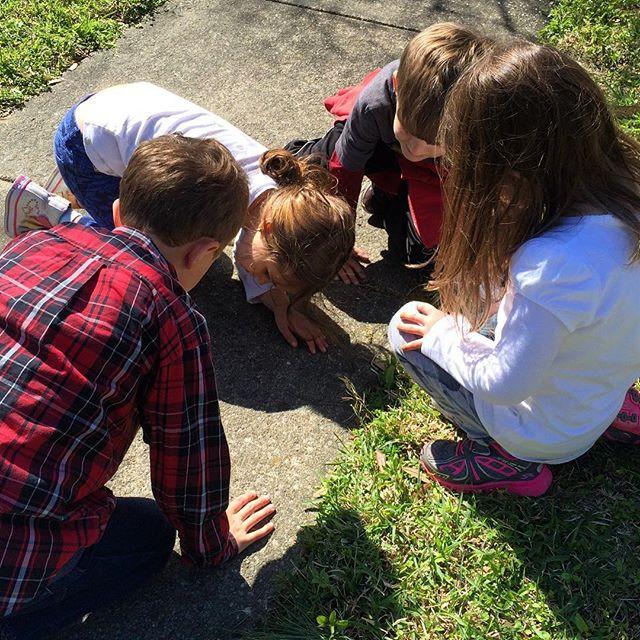 #Meliamae and the neighborhood kids playing with bugs. #SpringBreak