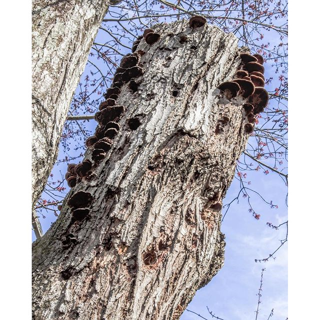 I look at this cut-off branch every day when I'm on the treadmill. I've always been intrigued by the fungus growing on it. There's a woodpecker that frequents it to look for breakfast as well.