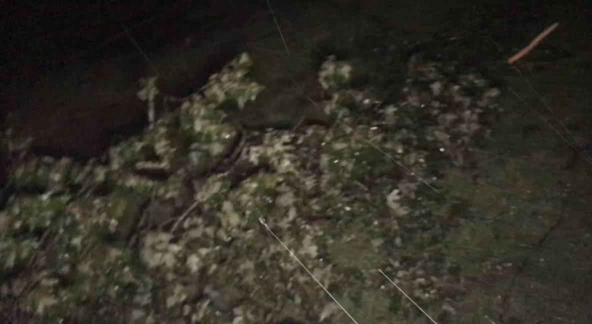 Hurricane-Dorian-Branch