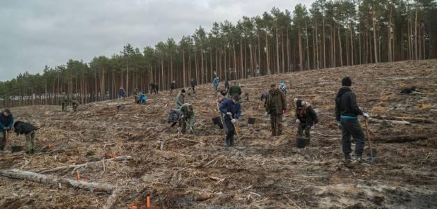 Sadzenie lasu w kształcie lilijki harcerskiej na XXX lecie ZHR