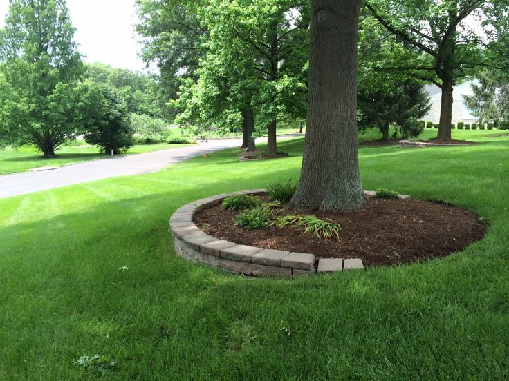 landscaping ideas trees