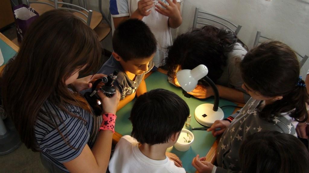 6-12 Montessori