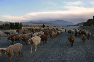Heavy traffic on the Tian Shan road