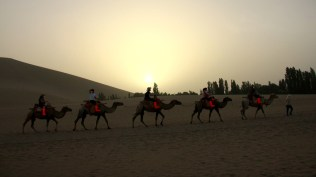 Camels in Dunhuang