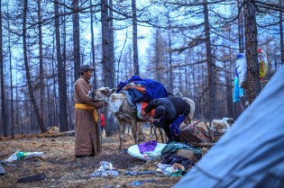 The Tsataans, people of the Reindeer, Siberian nomads...