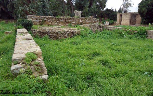 basilique-saint-cyprien-2