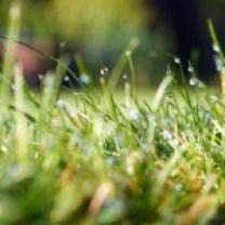 grass-498628