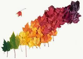 colores otoño1