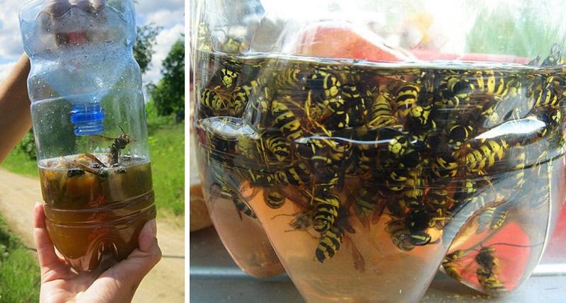 капан за насекоми