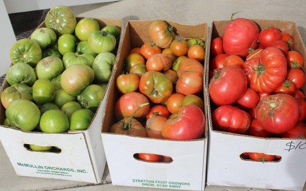 реколта домати