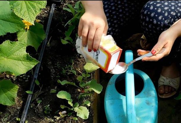 сода за градината