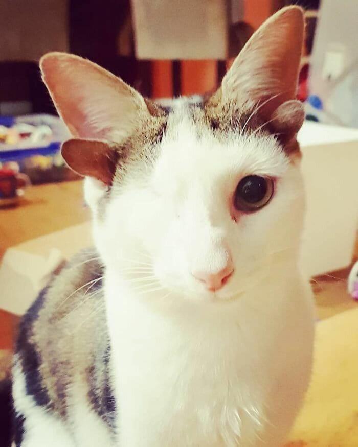 необичайно коте