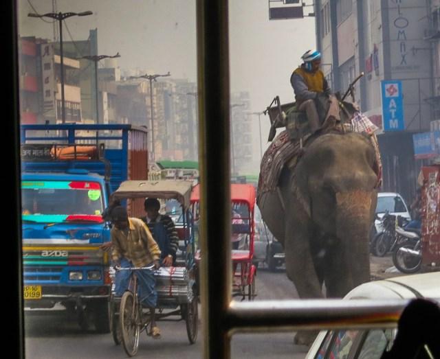 Eléphant dans la ville