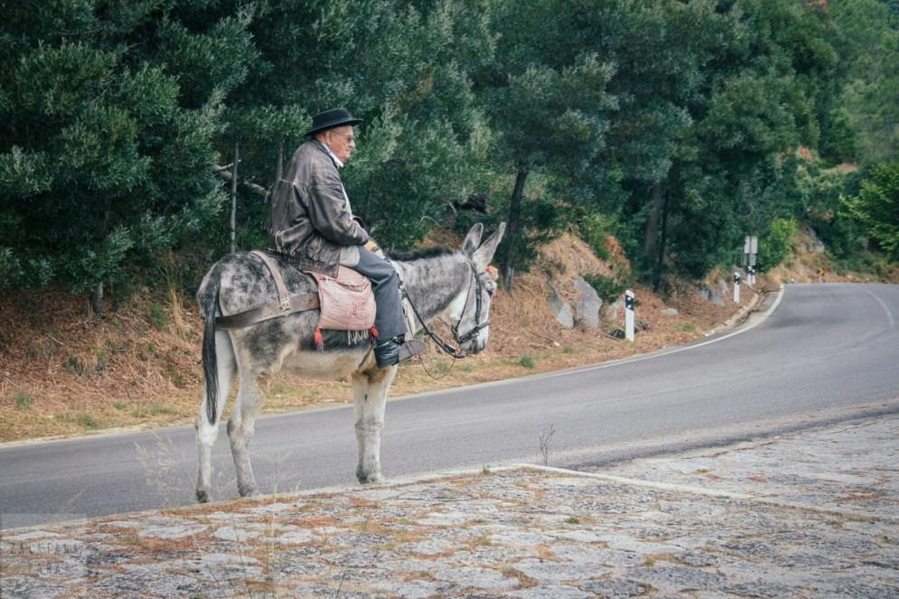 Samotny jeździec na osiołku gdzieś w paśmie górskim Sierra de Monchique