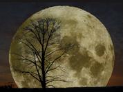Luna Arbole NASA
