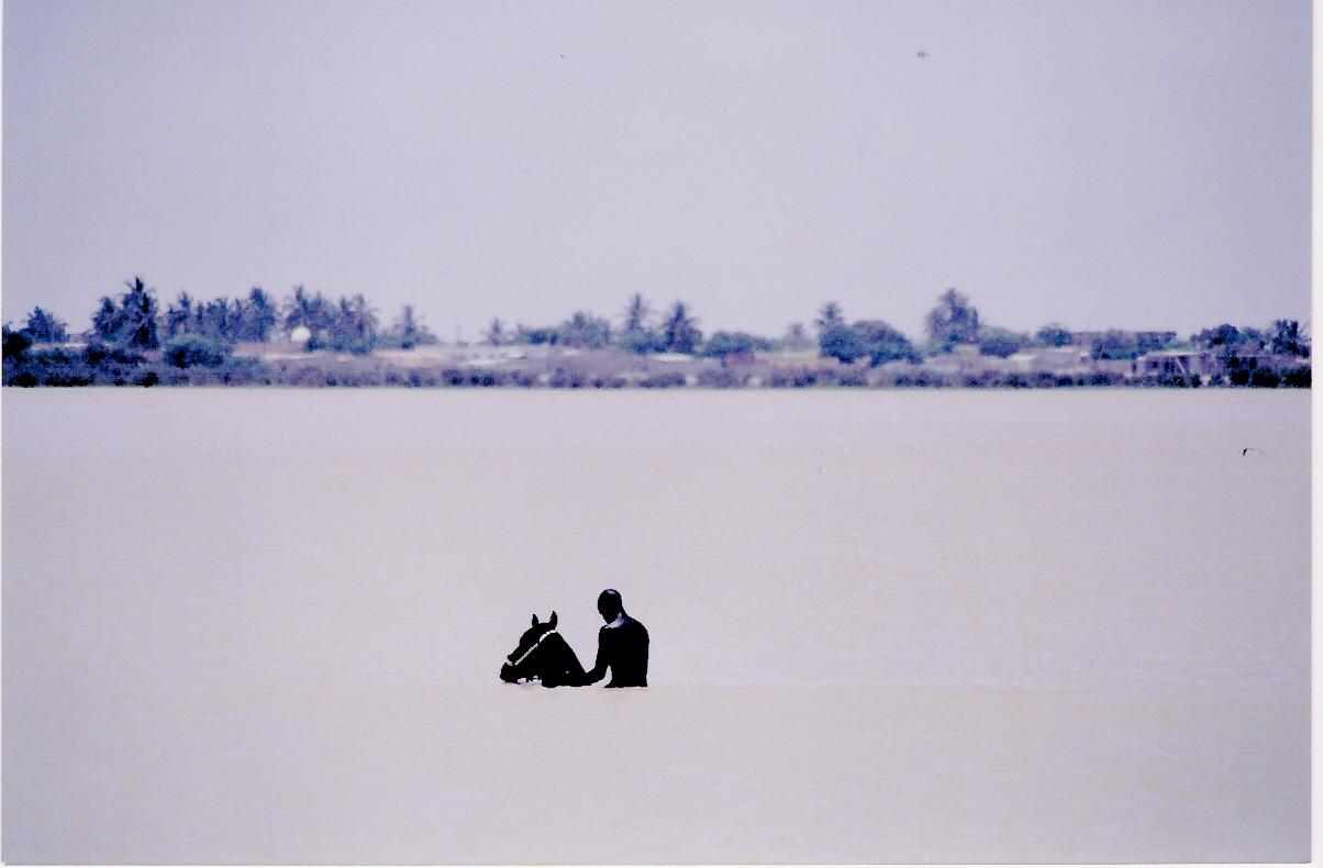 Μπάνιο καβάλα στ' άλoγο, στον ποταμό Σενεγάλη