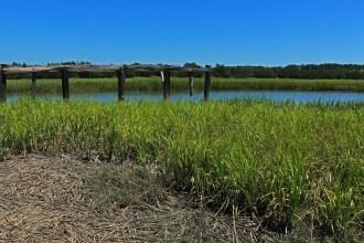 View of the marsh on Sapelo Island.