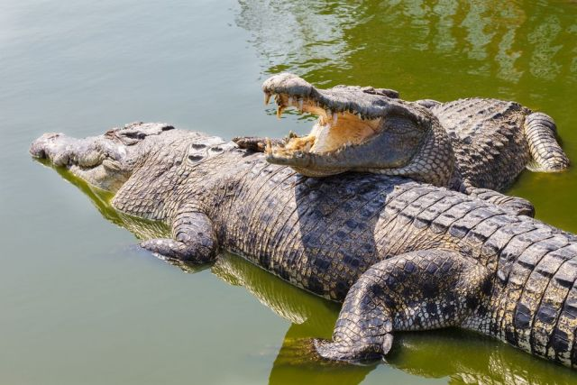 Video: 3 Boys rescue a fellow from crocodile