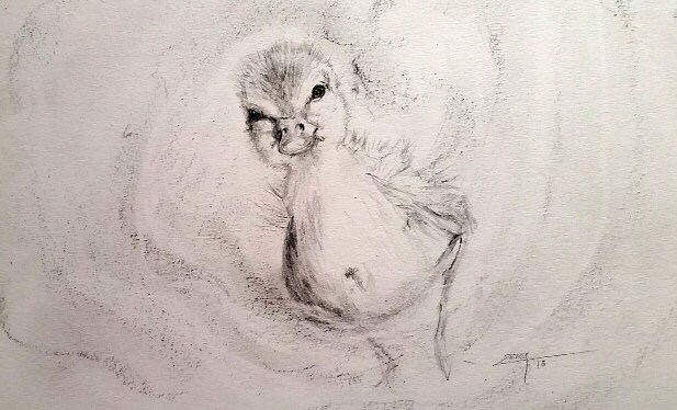 Drawing Duckling