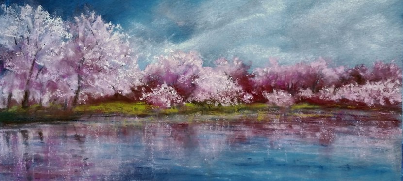Pastel Cherry Tree Reflection